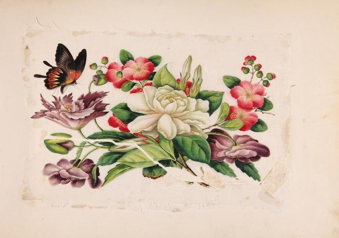 Альбом китайских экспортных миниатюр (тунцао чжи). 32листа. 1850-е. Тетрапанакс (tetrapanax), минеральные краски. Размер альбома 31x43см.